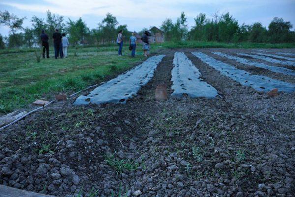 cries-agricultura-sustinuta-de-comunitate-26