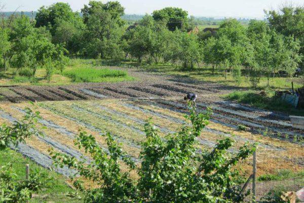 cries-agricultura-sustinuta-de-comunitate-27